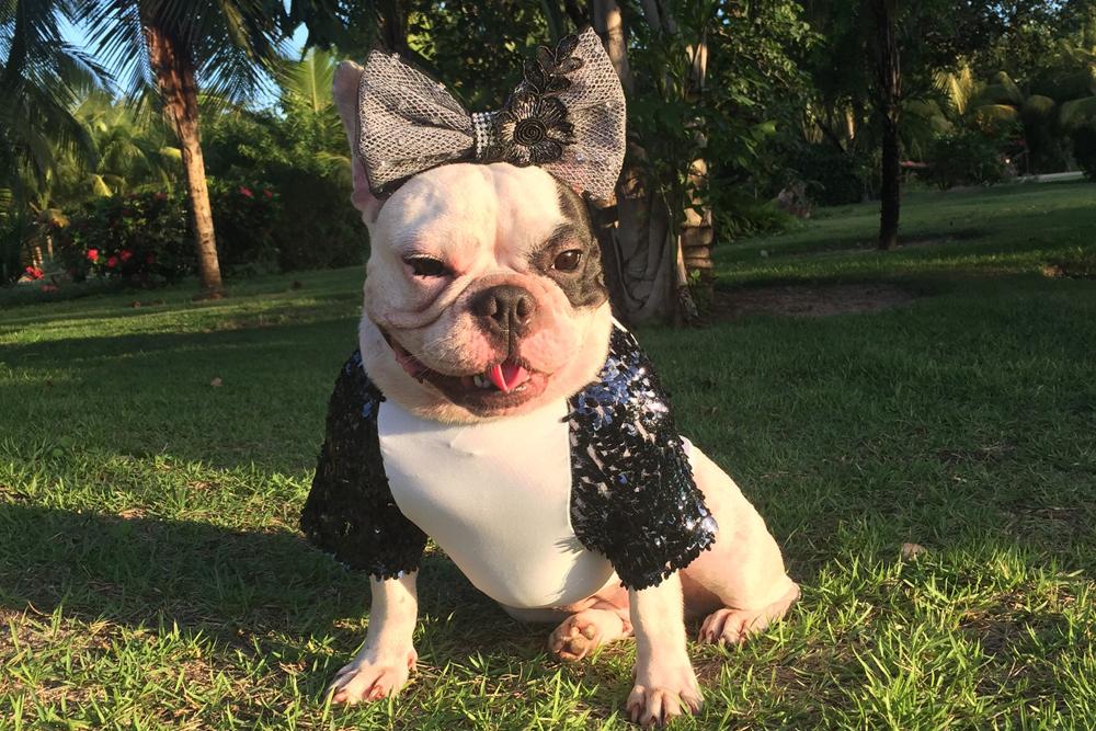 Pet Model Eva Bull