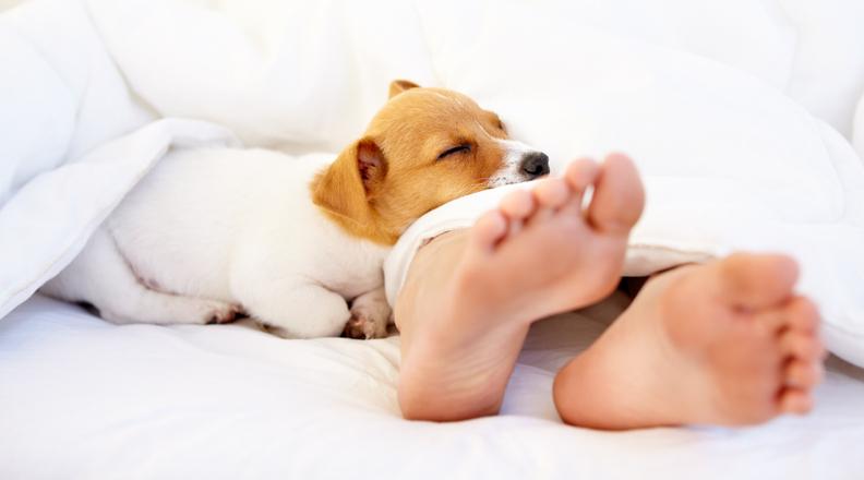 dormir animais